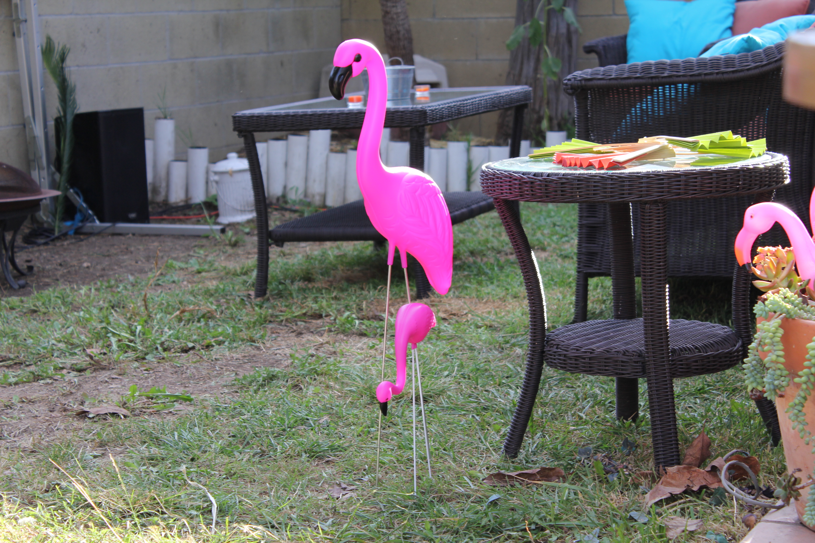 Flamingos & Backyard viewing